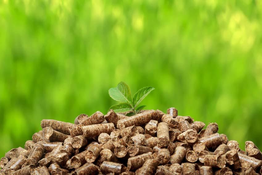 La biomasa como fuente de energía renovable
